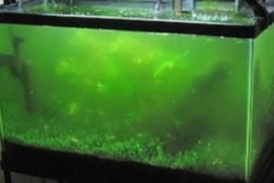 green-water-300x201